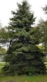tree 10